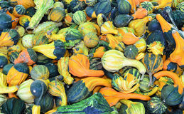 Gourds and pumpkins Royalty Free Stock Photos