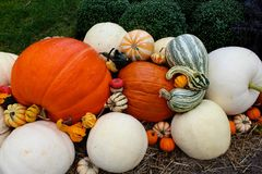 Pumpkins gourds Stock Photography
