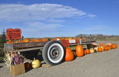 Gourds, and pumpkins for sale. A trailer full of pumpkins, squash, and gourds are for sale Stock Photos