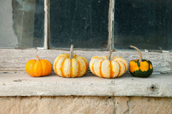 Gourds and pumpkins Royalty Free Stock Images