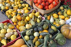 Gourds. Pumpkins and Gourds Squash Decoration in Crates For Halloween royalty free stock photos