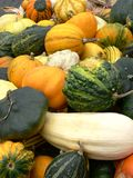 Gourds, pumpkins and squashes. A mixture of squashes Stock Images