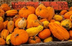 Gourds & Pumpkins Stock Image