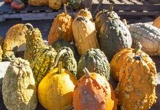 Gourds for sale at a pumpkin farm Stock Photo