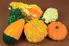 Gourds with smooth-skin and pebbled-skin. Stock Image