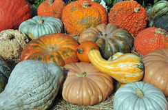 Gourds and Squash. Giant colorful gourds and huge blue hubbard squash at a local farm stand royalty free stock images