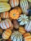Gourds and Squash Stock Image