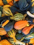 Gourds and Squash Royalty Free Stock Image