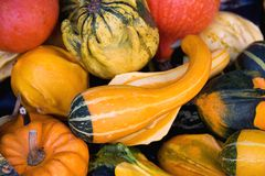 Gourds & squashes background Royalty Free Stock Photo