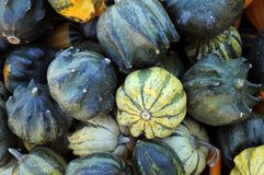 Gourds and squashes Royalty Free Stock Photography