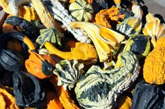 Gourds and squashes Royalty Free Stock Photos