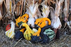 Gourds and squashes Royalty Free Stock Images