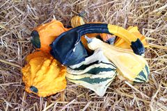 Gourds and squashes Royalty Free Stock Image