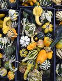 Gourds. A variety of colorful decorative gourds at the farm market in autumn royalty free stock photography