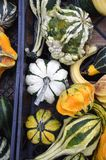 Gourds. A variety of colorful decorative gourds at the farm market in autumn royalty free stock photos