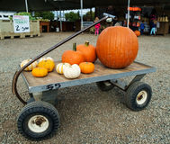 Gourds on wagon. Kent, WA, USA October 3, 2016: Pumpkins and gourds of various sizes and colors on a flat farm cart Stock Image