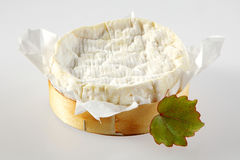 Gourmet Aged Cheese Round in Wooden Container Stock Photography