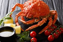 Gourmet boiled whole spider crab with lemon, tomatoes, bisillic. And melted butter close-up on a black background. horizontal royalty free stock photography