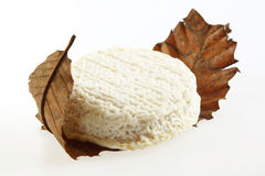 Gourmet Cheese wrappin in dried Leaf Royalty Free Stock Images