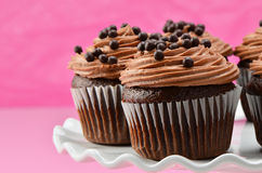 Gourmet chocolate iced cupcakes Royalty Free Stock Image