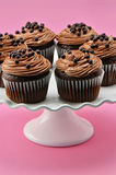 Gourmet chocolate iced cupcakes. Gourmet chocolate cupcakes with chocolate chiffon icing and chocolate balls on white cake stand with a deep pink background Royalty Free Stock Photography