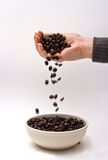 Gourmet coffee beans Stock Photos