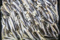 gourmet de poissons Photos libres de droits