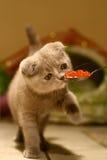 Gourmet del gatto fotografie stock libere da diritti