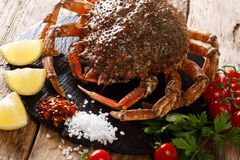 Gourmet food: raw spider crab with ingredients for cooking close. Up on a wooden table. Horizontal royalty free stock photography