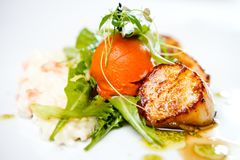 Gourmet food scallops. Haute cuisine, Gourmet food scallops with vegetables and salad stock images