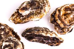 Gourmet fresh french oysters Stock Photography