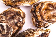 Gourmet fresh french oysters Royalty Free Stock Photo