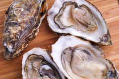 Gourmet fresh french oysters Stock Photos