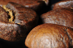 Gourmet- läckra kaffebönor Royaltyfria Foton