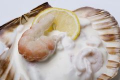 Gourmet Large Shrimps Salad Royalty Free Stock Photography