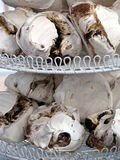 Gourmet Meringues Royalty Free Stock Photos