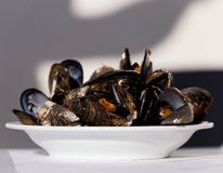Gourmet mussels on plate Stock Images