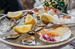 Gourmet mussels served with ice and lemon slices. seafood menu Stock Images