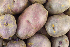 Gourmet purple potatoes Royalty Free Stock Images