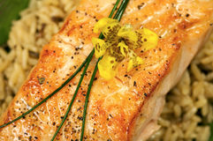 Gourmet Salmon Dinner. Fresh Salmon Cooked on a bed of rice Royalty Free Stock Image