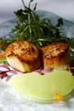 Gourmet seared scallops with garnishes Stock Images
