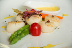 Gourmet seared scallops with garnishes. Royalty Free Stock Image