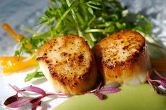 Gourmet Seared Scallops With Garnishes Royalty Free Stock Photo