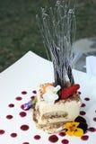 Gourmet Tiramisu. With berry drops and spun sugar Stock Photography