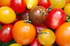 Gourmet Tomatoes Stock Photography