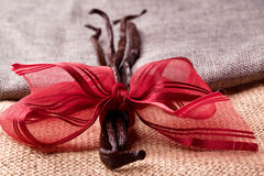 Gourmet vanilla bean. With red ribbon Stock Photography