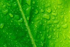 Goutte de feuille de l'eau verte après pluie Photographie stock libre de droits