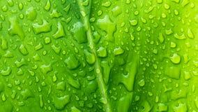 Goutte de feuille de l'eau verte après pluie Photographie stock