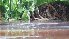 Goutte de l'eau de pluie sur le plancher en bois banque de vidéos