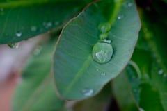 Goutte de l'eau sur la feuille Photographie stock